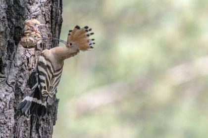 Tag des Artenschutzes